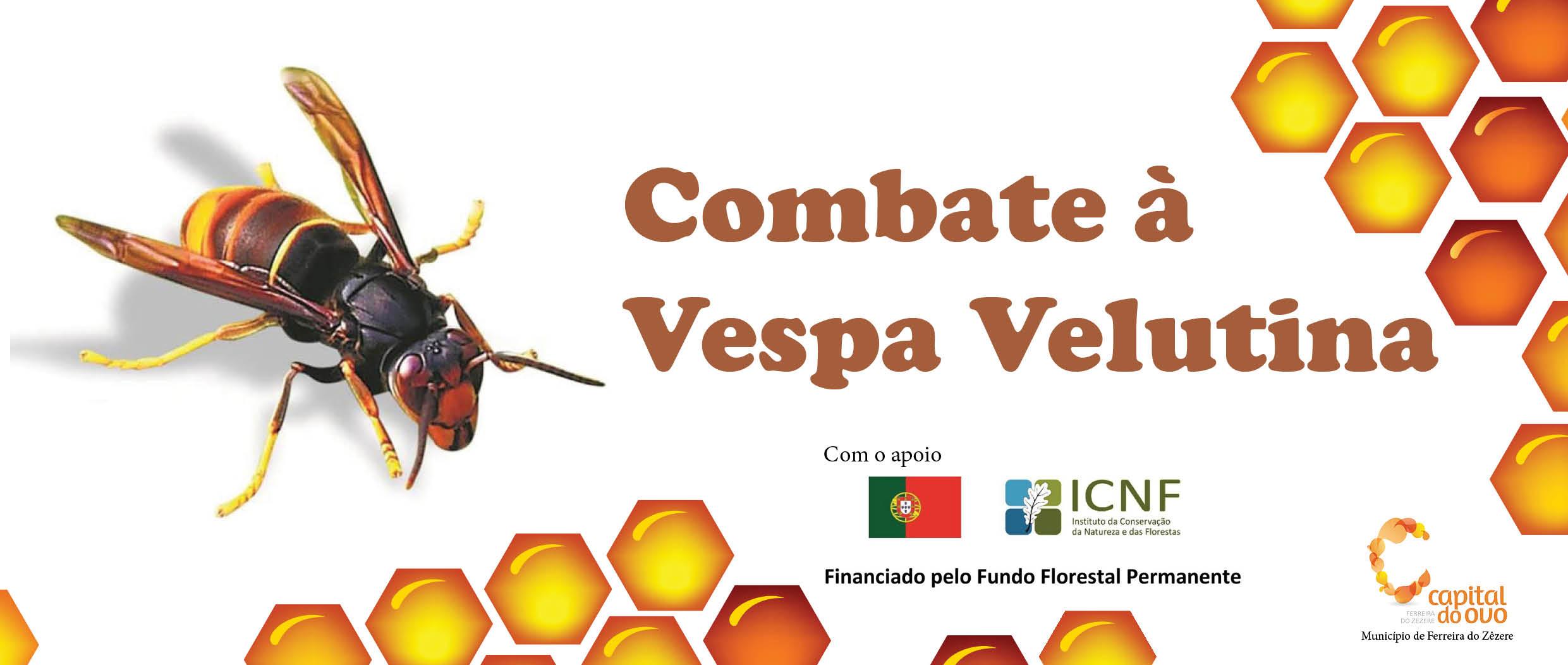 Combate à Vespa Velutina