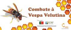 Continuar... Combate à Vespa Velutina